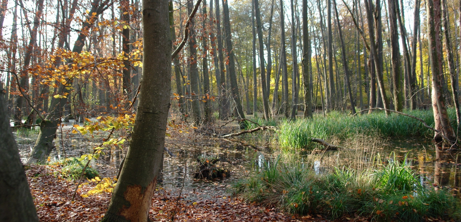 Sumpfgebiet am Jakobsdorfer See