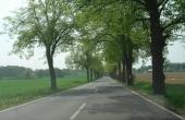 Straße zwischen Britz und Golzow