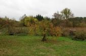Apfelbaum in Greiffenberg