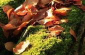 autumn-63450_640