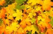 fall-57427_640