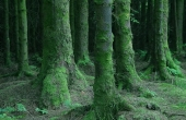 forest-3718_640