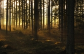 forest-56920_640