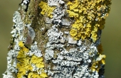lichen-100435_640