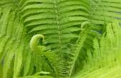 plant-54409_640