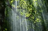 sunbeams-56930_640