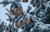 winter-70070_640