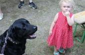 Keine Angst vor großen Hunden