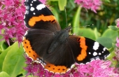 butterfly-66914_640