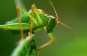 delicate-insect-107419_640