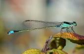 dragonfly-62963_640