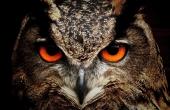 owl-50267_640