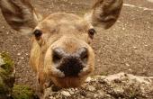 roe-deer-110068_640