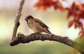 sparrow-9950_640-1