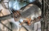 squirrel-103232_640