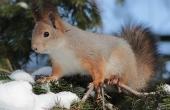 squirrel-86506_640
