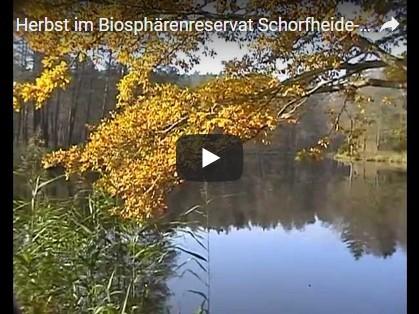 Schorfheide Video